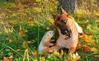 คู่ซี้ต่างพันธุ์! เมื่อน้องหมามีเฟอเรทเป็นเพื่อน น่ารักแค่ไหนดูเลย