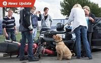 เจ้าของหมาฟังไว้! ปล่อยหมาวิ่งตัดหน้ารถคนอื่น เจ้าของผิดมีโทษทางอาญา