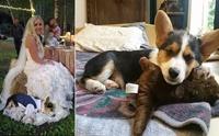 เจ้าสาวป้ายแดงลมแทบจับ ได้รับของขวัญแต่งงานเป็นลูกสุนัข!