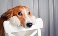 เปรียบเทียบสำนวน มะหมา ในภาษาต่าง ๆ ทำไมถึงมองหมาในแง่ลบ