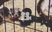 เมื่อลูกหมาเจอลูกลิง มันก็จะป่วนๆ แบบนี้!