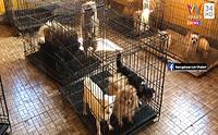 สุดสลด! บุกจับฟาร์มค้าสุนัขเถื่อน พบน้องหมาป่วยหลายตัว