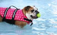 จัดอันดับ 5 สายพันธุ์สุนัขว่ายน้ำไม่เก่ง ต้องดูแลใกล้ชิด!