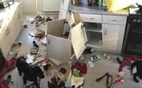 เจ้าของคิดว่าโจรขึ้นบ้านหลังห้องครัวเละเทะ สุดท้ายพบเป็นฝีมือตูบ!
