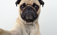 จัดอับดับ 5 น้องหมาโคตรปังในไอจี ที่ทาสหมาควรกดฟอล