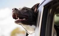 แชร์เก็บไว้เลย! 5 Tip ต้องทำป้องกันอุบัติเหุตช่วงปีใหม่ให้น้องหมา