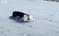 สไลเดอร์พื้นหิมะแสนสนุกของเจ้าตูบ