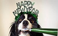 5 สิ่งที่ควรระวัง! หากพาน้องหมาไปเคาท์ดาวน์ในคืนปีใหม่
