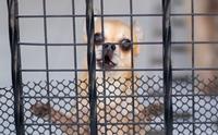 จัดการปัญหา น้องหมาได้ยินเสียงกริ่งแล้วเห่าจนบ้านแทบแตก