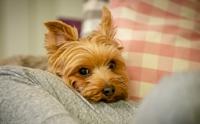 4 เหตุผล ที่จะทำให้คุณเข้าใจว่าทำไมน้องหมาจึงชอบนั่งตักเจ้าของ