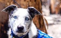 หลากหลายเรื่องราวของน้องหมากับไฟป่าในออสเตรเลีย