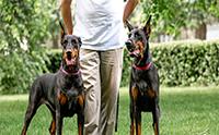 จัดอันดับ 5 สายพันธุ์น้องหมาสุดยอดนักเฝ้าบ้าน