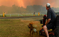 ปลอดภัยไว้ก่อน! ตามดูการช่วยเหลือสัตว์เลี้ยงและสัตว์ป่าจากกรณีไฟไหม้ป่าที่ออสเตรเลีย