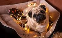 ตั้งเป้าแล้วลุย! 4 ปณิธานปีใหม่ เจ้าของทำได้น้องหมาสุขภาพดี