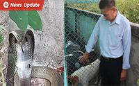 สู้สุดใจ! �เจ้าเพชร� สุนัขไทยหลังอานปกป้องเจ้านายจากงูเห่าเข้าบ้าน
