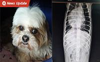 พิษร้ายจากฝุ่น PM2.5 เมื่อฝุ่นทำให้น้องหมาป่วยเป็นโรค COPD