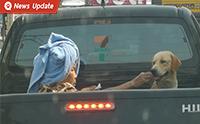 สุดเอ็นดู เมื่อคุณยายนั่งหลังกระบะเป็นเพื่อนน้องหมาที่ป่วยอยู่