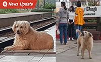 �เจ้ากี้� น้องหมาประจำสถานีรถไฟที่ชื่นชอบการร้องเพลงชาติทุกเช้า-เย็น