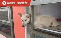 พบลูกสุนัขหัวติดเสาลูกกรงโรงอาหารโรงเรียน คาดความหิวเป็นเหตุ