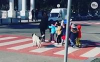 ตามตูบมา! หมาจรฯแสนรู้ขวางรถ พากลุ่มเด็กอนุบาลเดินข้ามถนน (คลิป)
