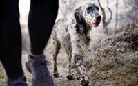 Alabama rot โรคมรณะลึกลับในสุนัข ที่ยังไม่ทราบสาเหตุ