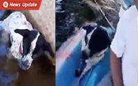 เกือบจมน้ำตาย! หนุ่มใจบุญขับเรือช่วยสุนัขที่ถูกล่ามแช่น้ำอยู่ใต้สะพาน