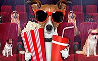 ขำกันกรามค้าง! 10 ภาพยนตร์และการ์ตูนเกี่ยวกับน้องหมาน้องแมวสุดฮา