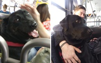 ไม่ง้อเจ้าของ! น้องหมาแสนรู้นั่งบัสไปกลับสวนสาธารณะเองทุกวัน