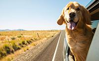 จัดอันดับ 5 น้องหมาที่เหมาะกับคนรักการท่องเที่ยว