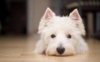 4 โรคระบาดน่ากลัวในคน สามารถติดน้องหมาได้หรือไม่