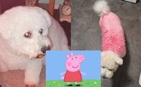 ตูบกลายเป็น Peppa Pig หลังคุณแม่ลูก 3 พลาดทำสีหกใส่!