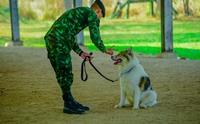เยี่ยมชมบ้านสุนัขทหาร ของดีเมืองโคราชของคนรักสุนัข