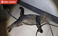 เตือนใจคนเลี้ยงสัตว์! แมวกัดสายไฟโดนช็อตจนเสียชีวิต