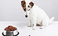 จัดอันดับ 5 น้องหมาสายพันธุ์เล็กที่กินยาก