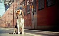 อัปเดต! อยากพาน้องหมาขึ้นรถไฟต้องทำไงบ้าง
