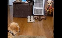 ทำไมมีมีหนูอีกตัวอยู่ในรูป