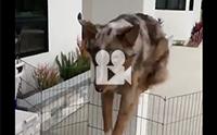 นี่หมาหรือกระต่ายกันแน่
