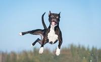 4 พฤติกรรมของน้องหมาที่ดูน่ารัก แต่จริง ๆ แล้วแฝงไปด้วยอันตราย!