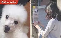 ไม่เคยย่อท้อ กับ 5 ปีที่น้องนิ้งตามหาสุนัขของเธอ