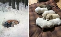 ไออุ่นจากแม่! ช่วยลูกๆ 6 ชีวิตรอดตายกลางหิมะหนาวจัด
