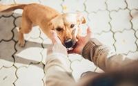 จัดการปัญหาเจ็บ ๆ ... ดัดนิสัยน้องหมาเล่นแรงชอบงับมือ