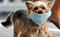 7 วิธีเอาตัวรอดจากโรค COVID-19 ของคนและสุนัข