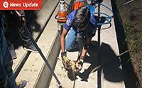ทีมกู้ภัยกระบี่พิทักษ์ประชา ช่วยชีวิตน้องหมาติดอยู่ในซอกเสาไฟฟ้า