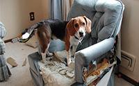 จัดอันดับ 5 น้องหมาสายพันธุ์เล็กจอมทำลายบ้าน