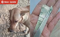 สาวใจบุญซื้อไก่ให้น้องหมา จนน้องหมาคาบโชคมาให้