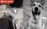 หนุ่มโพสต์เรื่องเศร้า น้องหมาโดนทำร้ายจนเสียชีวิต เตรียมดำเนินคดีผู้ต้องสงสัย