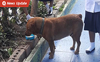 โป๊ะแตก! เมื่ออาจารย์จับได้ว่านักเรียนแอบเอานมโรงเรียนที่แจกไปให้น้องหมา