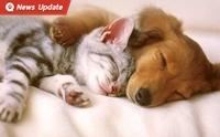 ฉีดวัคซีน หมา-แมว ฟรี! ป้องกันโรคพิษสุนัขบ้า ตั้งแต่วันนี้ - 31 ก.ค.63