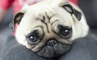 5 ข้อปฏิบัติที่ลดความเสี่ยงไม่ให้น้องหมาต้องป่วยในช่วงโควิดระบาด