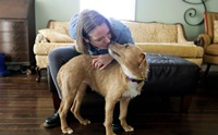 ปลื้ม! วิกฤตโควิด-19 ทำให้ชาวอเมริกันรับเลี้ยงสุนัขมากขึ้น